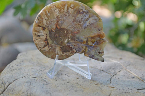 Carved Ammonite Fossils - Skulls