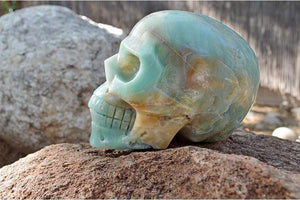 Crystal Wholesale Amazonite Crystal Skull Carving II - Large