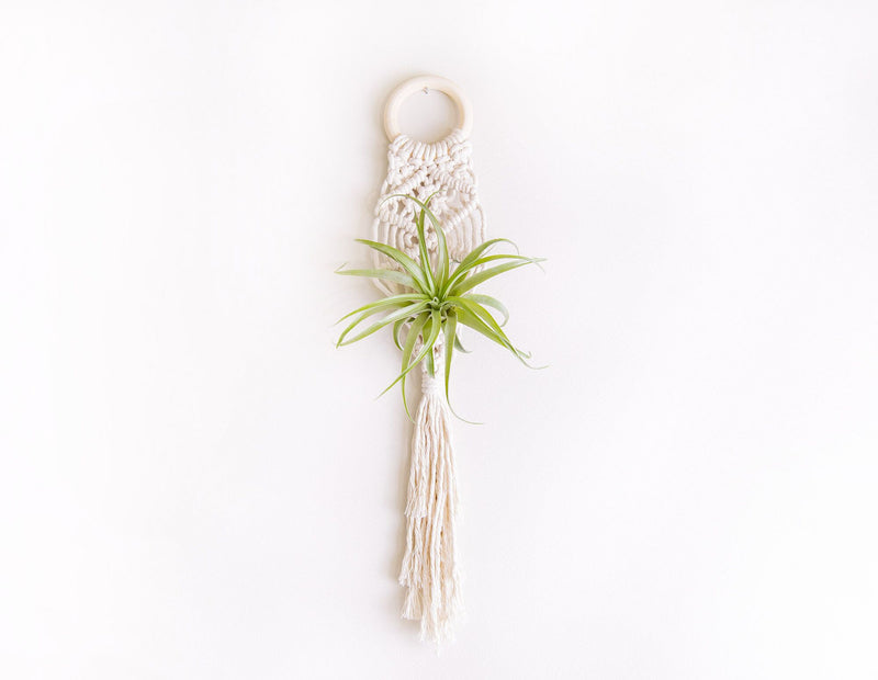 Mini Macrame Air Plant Holder