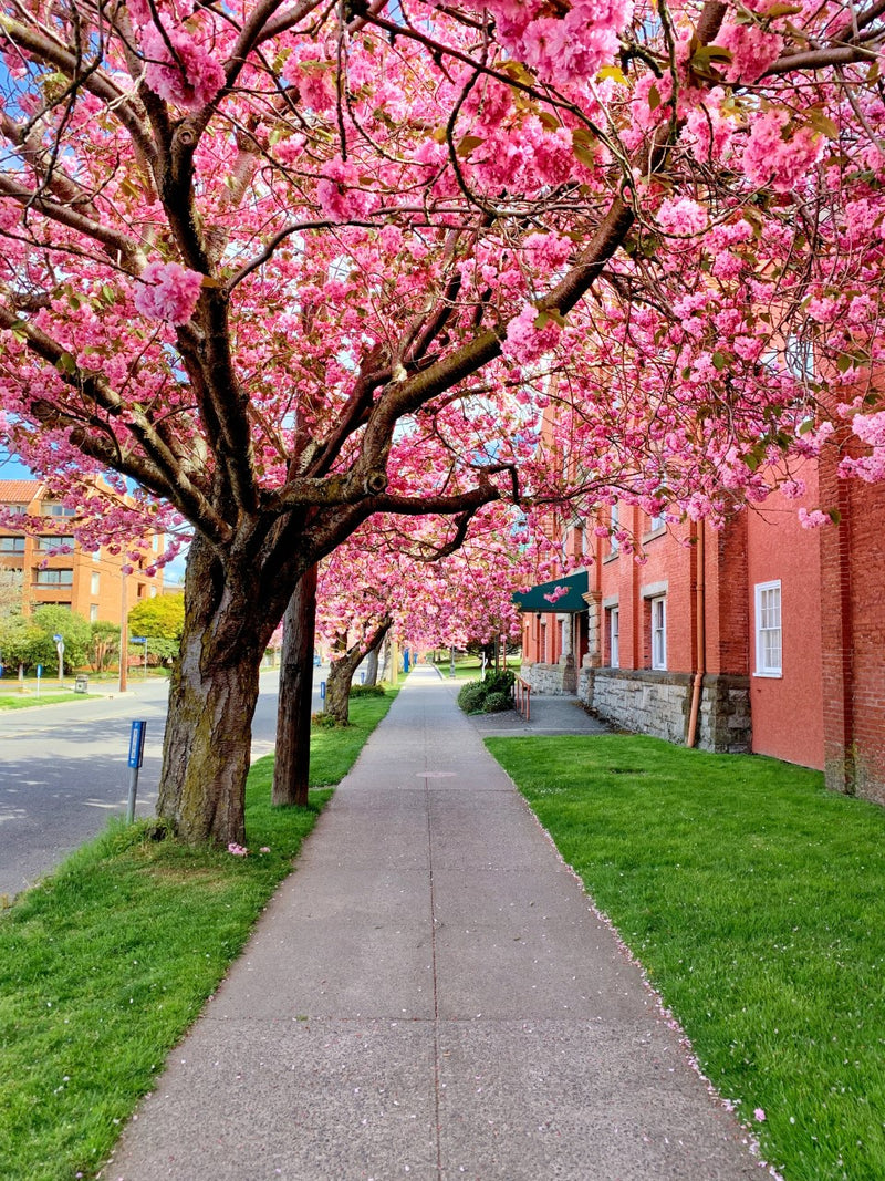 Boulevard of Blossoms Photography Print
