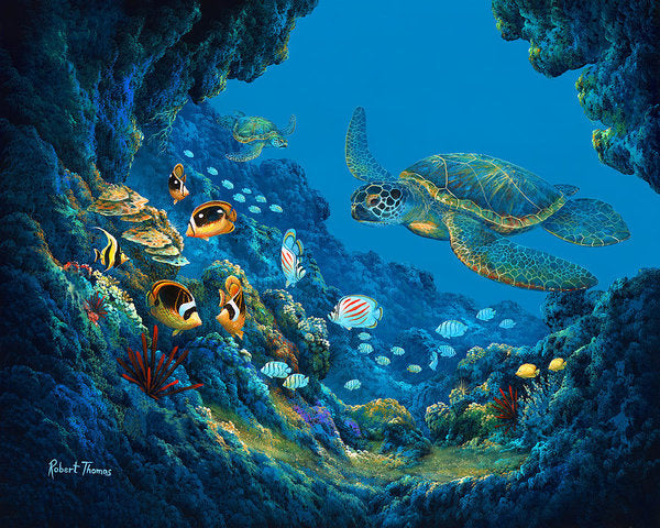 Turtle Cove - Art Print