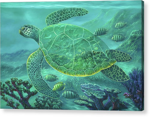 Glass Turtle - Acrylic Print