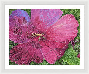 Pink Hibiscus Dream By Robert Thomas, Framed Print