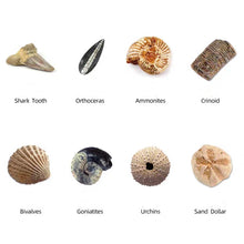 Load image into Gallery viewer, [Ready Stock] Mining Kit - Fossils