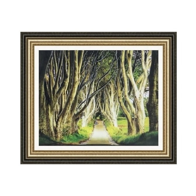 Dark Hedges Picture