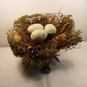 Woodland Nest with Eggs