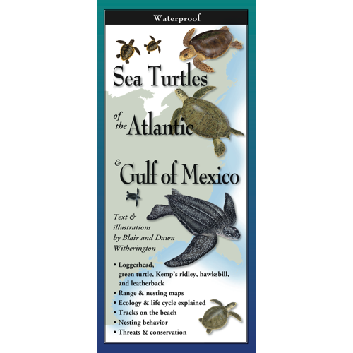 Folding Guide - Sea Turtles of the Atlantic & Gulf of Mexico