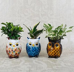 decorative plants buy online