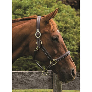 HDR Kushy Plain Raised Halter with Flat Cheeks