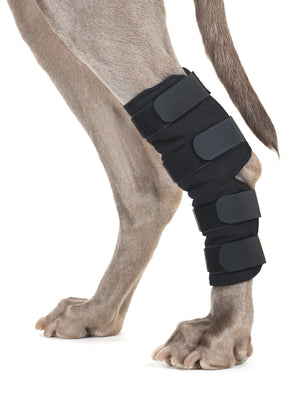 Back On Track Dog Hock Brace