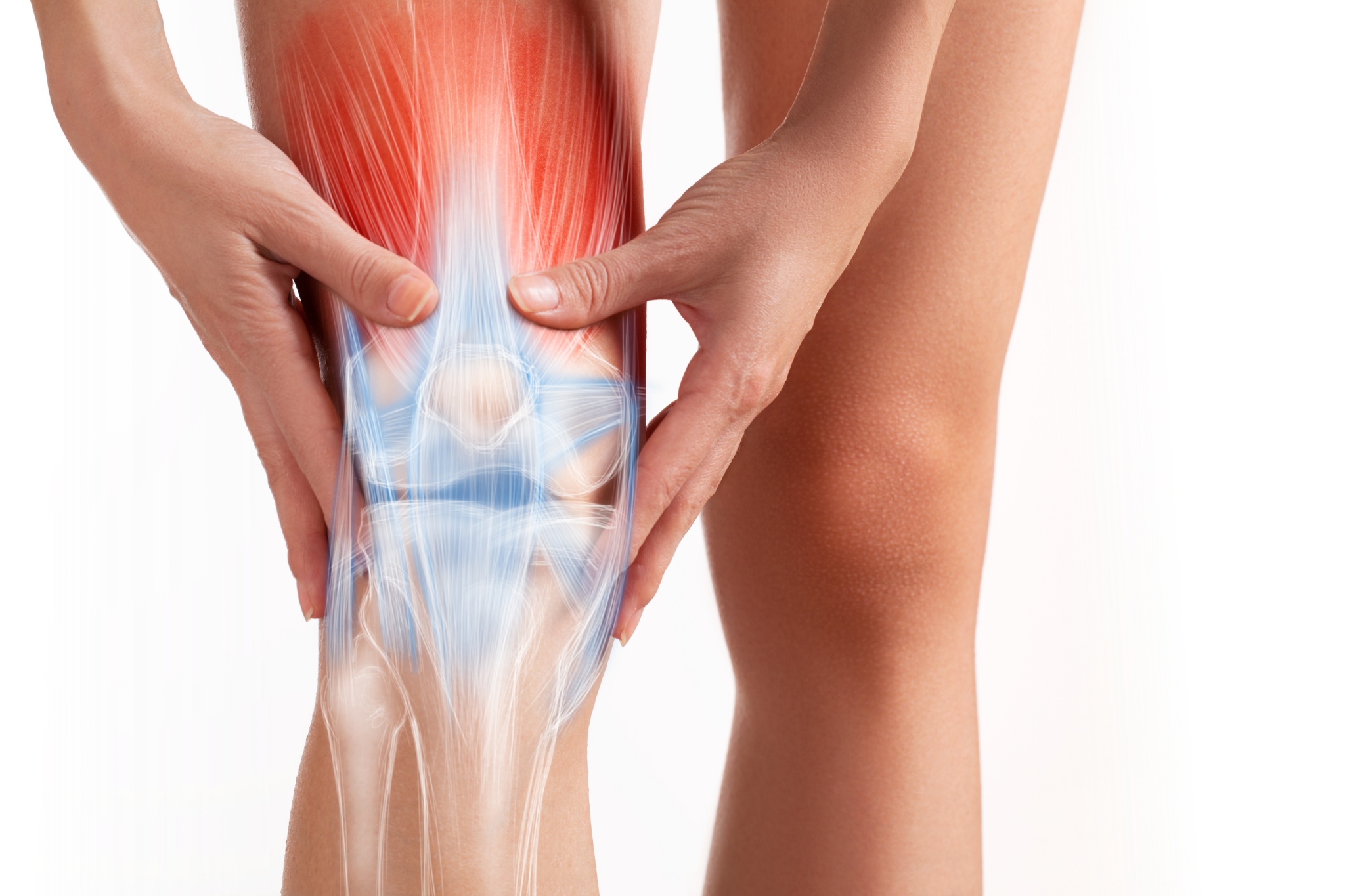 Rendering of knee with bones, tendons and ligaments showing; emphasising knee pain.