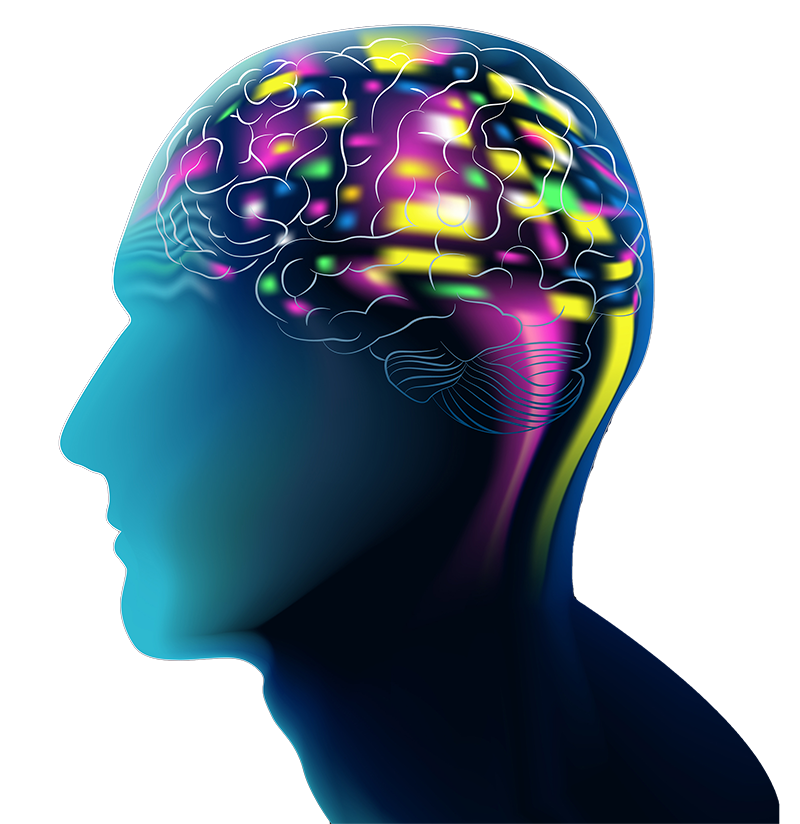 3-D rendering - side view of the head illustrating neurotransmitter activity related to GABA