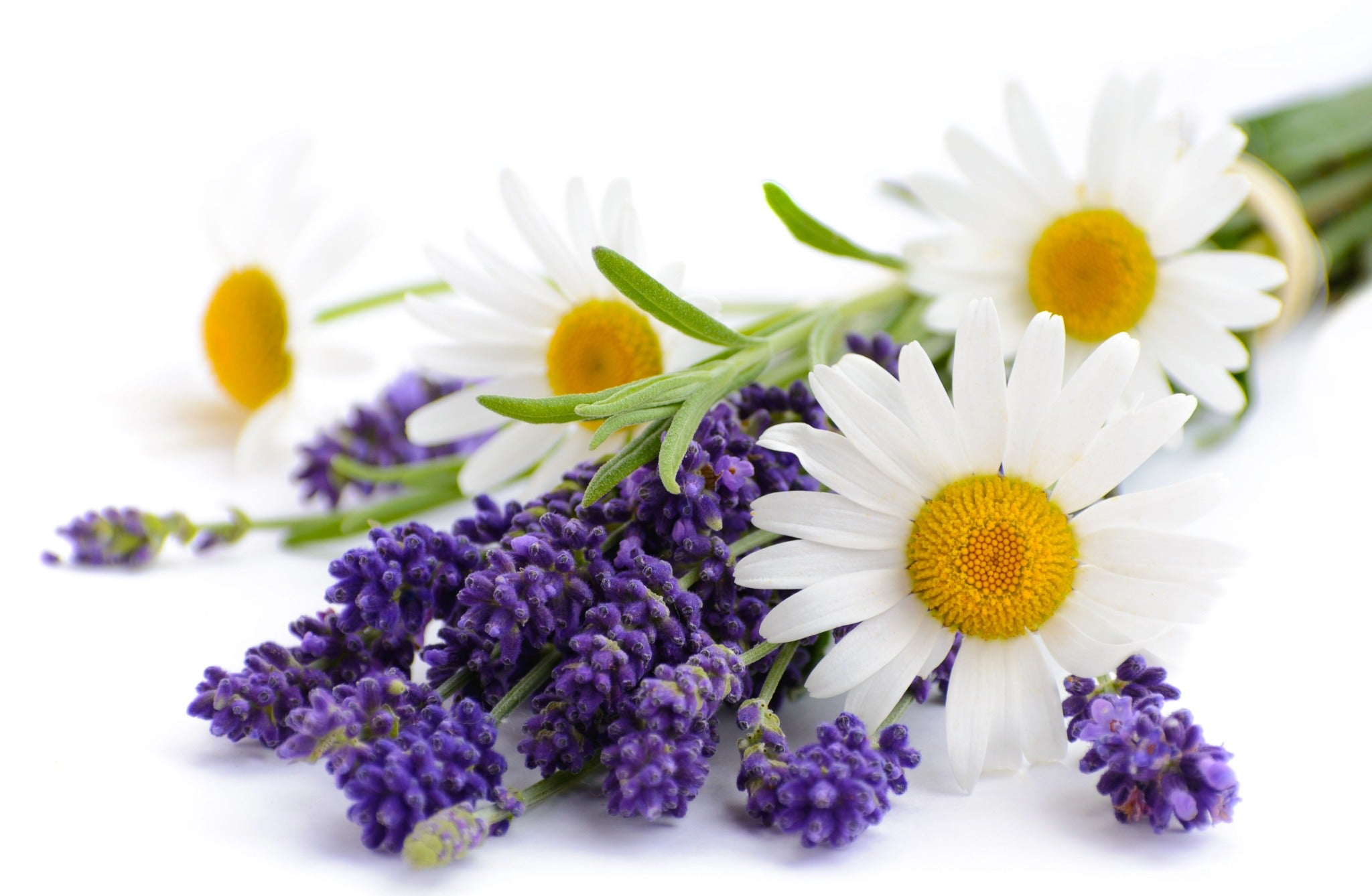 Lavender and chamomile flowers on white background