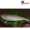 Hilsa Fish (Frozen)