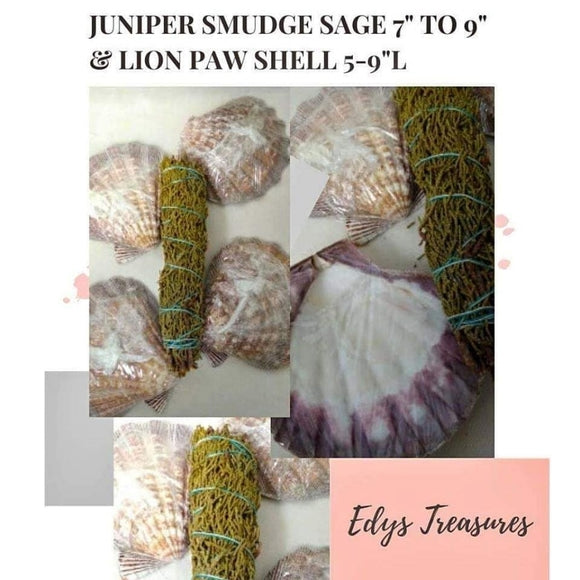 "Juniper Smudge Sage 7"" to 9"" & Lion Paw Shell 5-9"" - Edy's Treasures"
