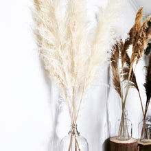 Load image into Gallery viewer, Beige Pampas Grass - White