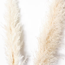 Load image into Gallery viewer, Snow Pampas Grass - White