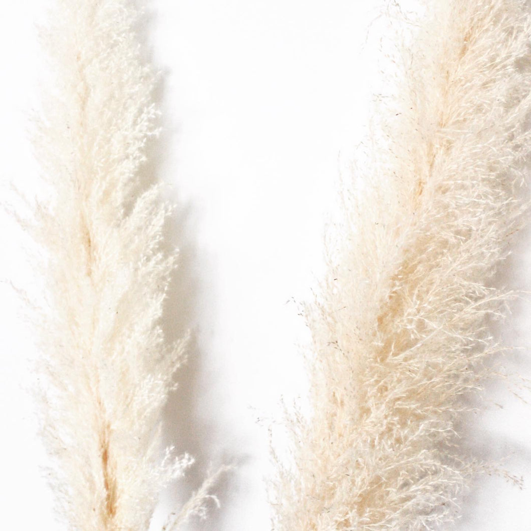 Snow Pampas Grass - White