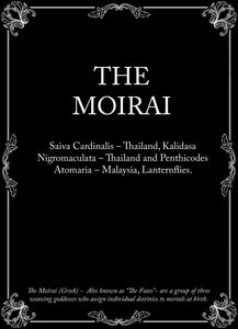 The Moirai