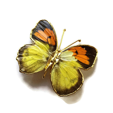 Blazing Orange and Yellow Gold Tone Butterfly Brooch circa 1970s