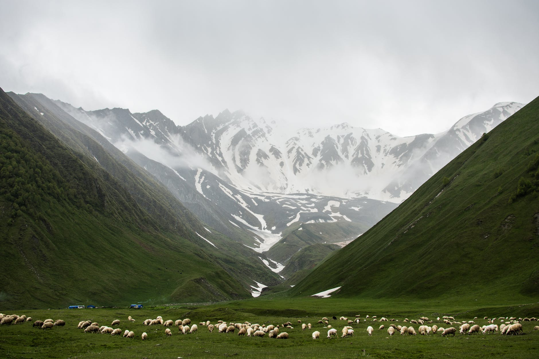 mountains dusted with snow and a flock of sheep grazing in a green valley