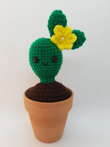 Smiling Cacti (Ears Together)