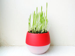 Cat Grass Kits - Colorful Plastic Planter