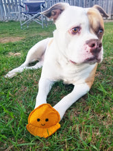 Load image into Gallery viewer, Dog Toys - Octopus - Plush Toys with Squeaker