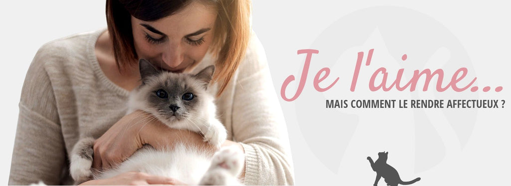 Comment Rendre un Chat Calin ?