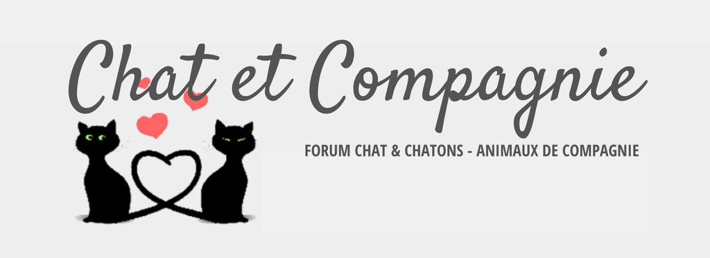 Chat et Compagnie