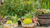 How to Take Care of Succulents Indoors and Outdoors Header