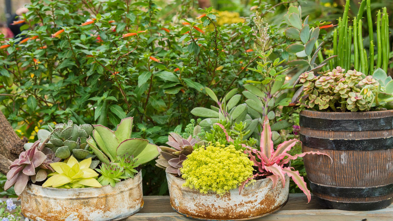 How To Take Care Of Succulents Indoors And Outdoors Gardening Gardening Blog How To Grow And More Homegrown Garden Blogs Blog