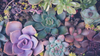 Which Succulents Can Be Planted Together? Header