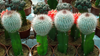 Cactus Grafting Guide - How to Graft a Cactus Plant Header