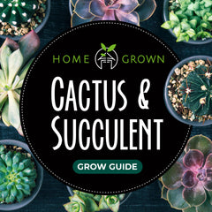 Cactus and Succulent Grow Guide