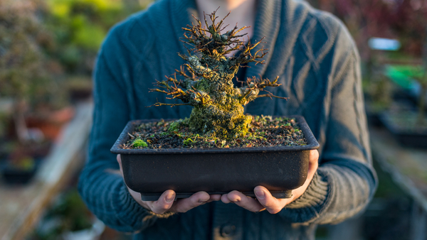 person carrying a bonsai tree