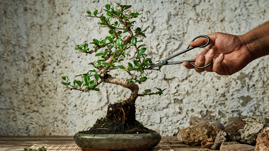 Pruning for Maintenance