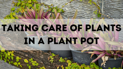 TAKING CARE OF PLANTS IN A PLANT POT
