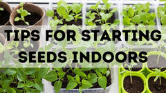 TIPS FOR STARTING SEEDS INDOORS