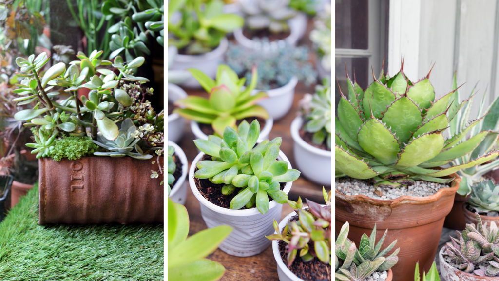 Succulents in different kinds of container