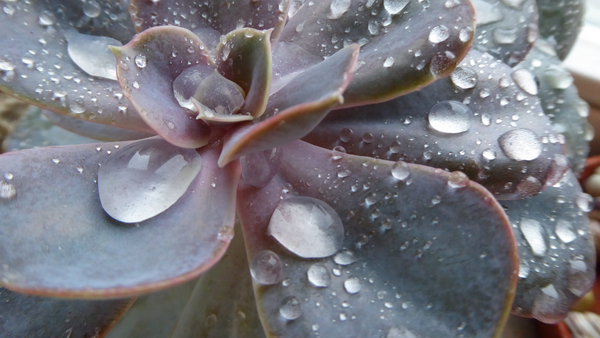 Succulent with water bubbles
