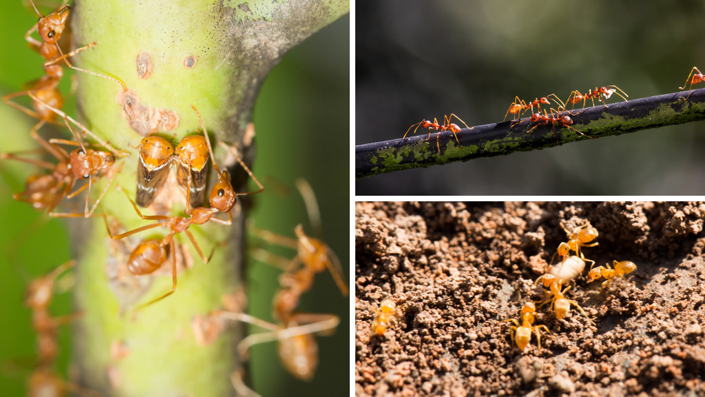 5 TIPS on How to get rid of ants in your garden