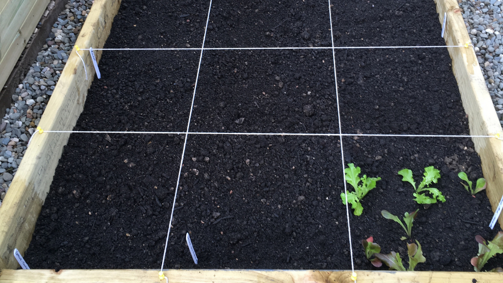 Inserting Grids on Raised Bed