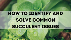 How to Identify and Solve Common Succulent Issues