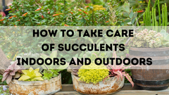 HOW TO TAKE CARE OF SUCCULENTS INDOORS AND OUTDOORS