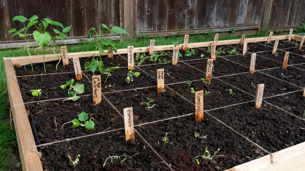 planting on raised bed via square foot gardening