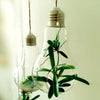DIY Light Bulb Planter for Indoor Decor