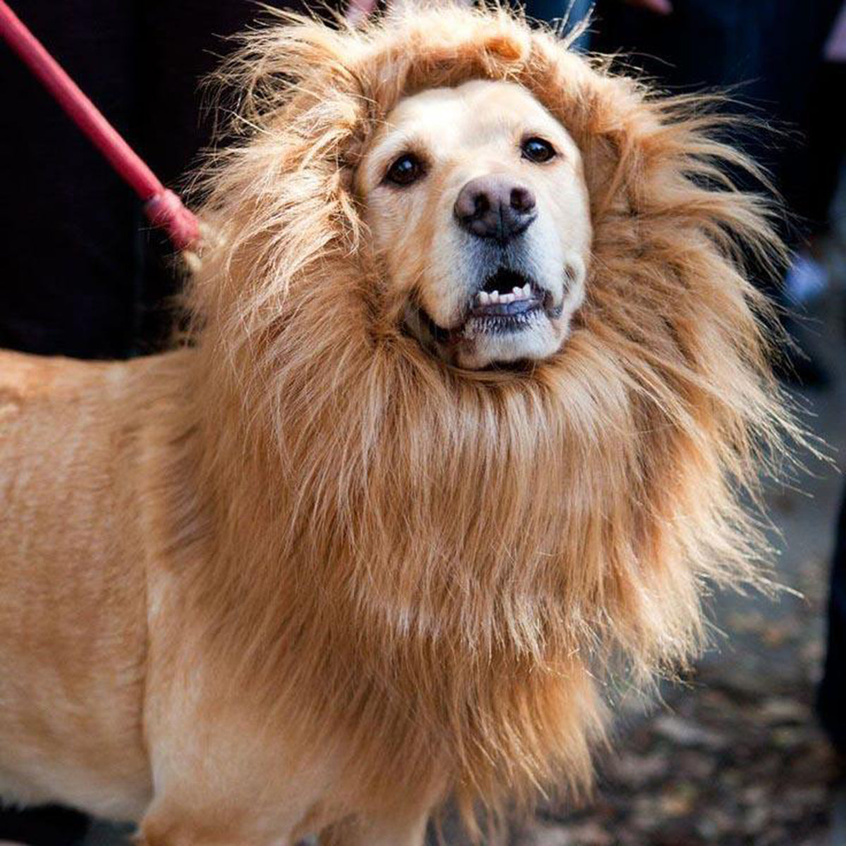 Light Brown Large Lion Mane for Dog