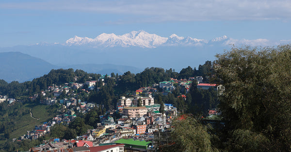 Darjeeling Tea Estates: A Constant Evolution