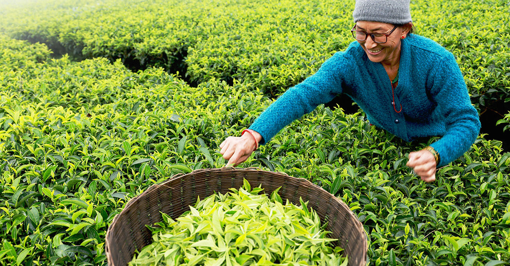 How We Met Nepali Tea Farmers